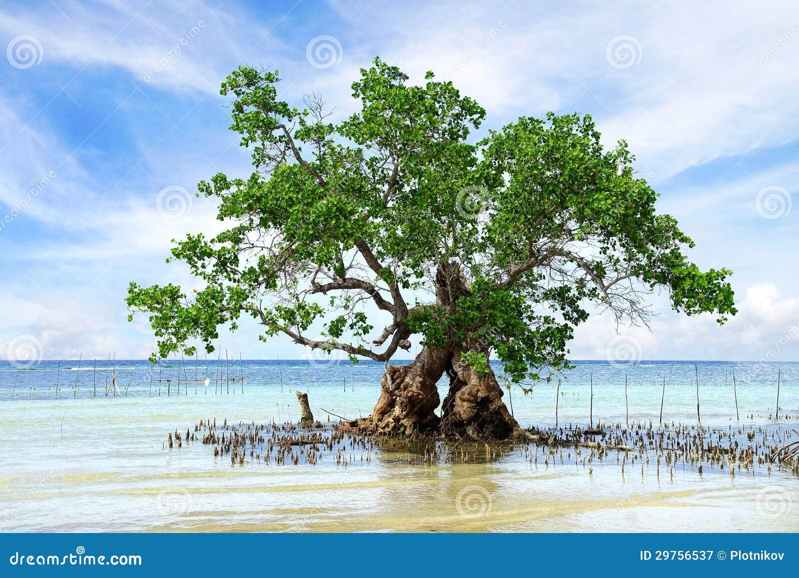 [Jeu] Association d'images - Page 18 Paisaje-con-el-rbol-del-mangle-isla-de-siquijor-filipinas-29756537
