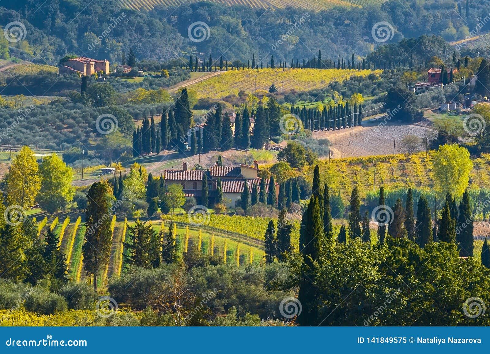 Paisaje con filas de los viñedos, Italia de Toscana