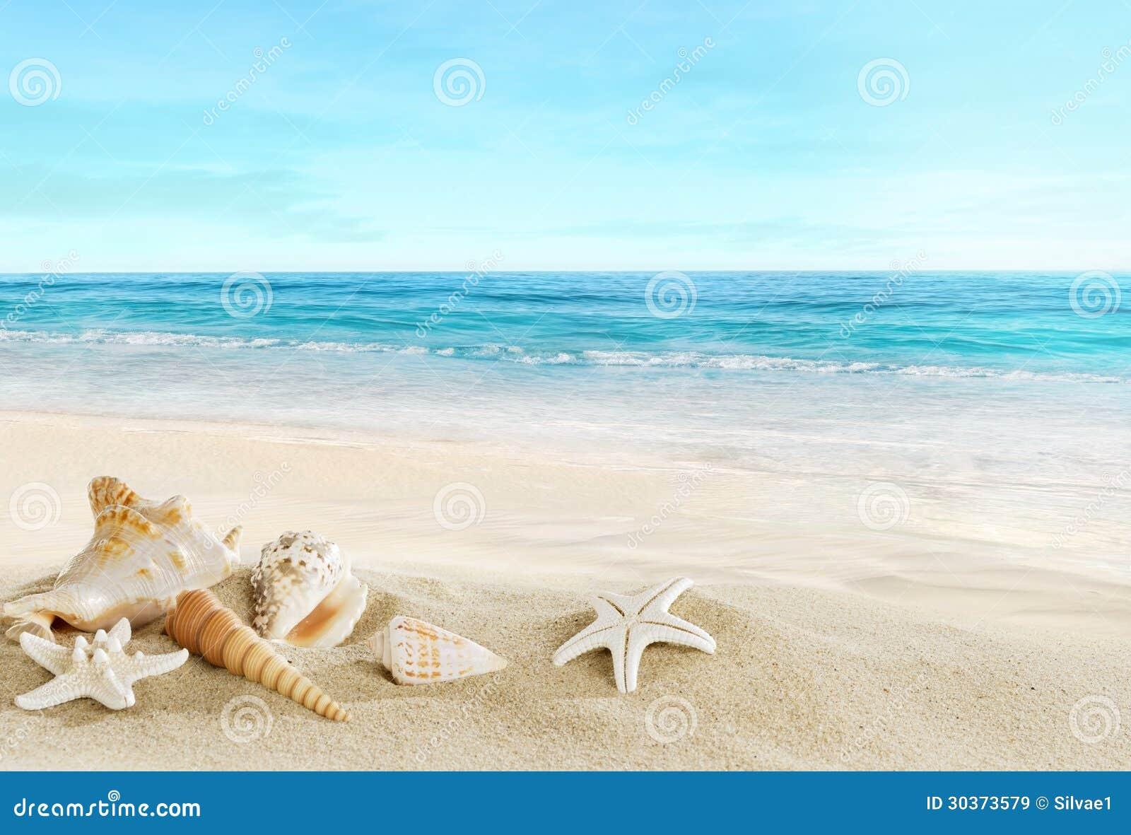 Paisaje con las cáscaras en la playa tropical