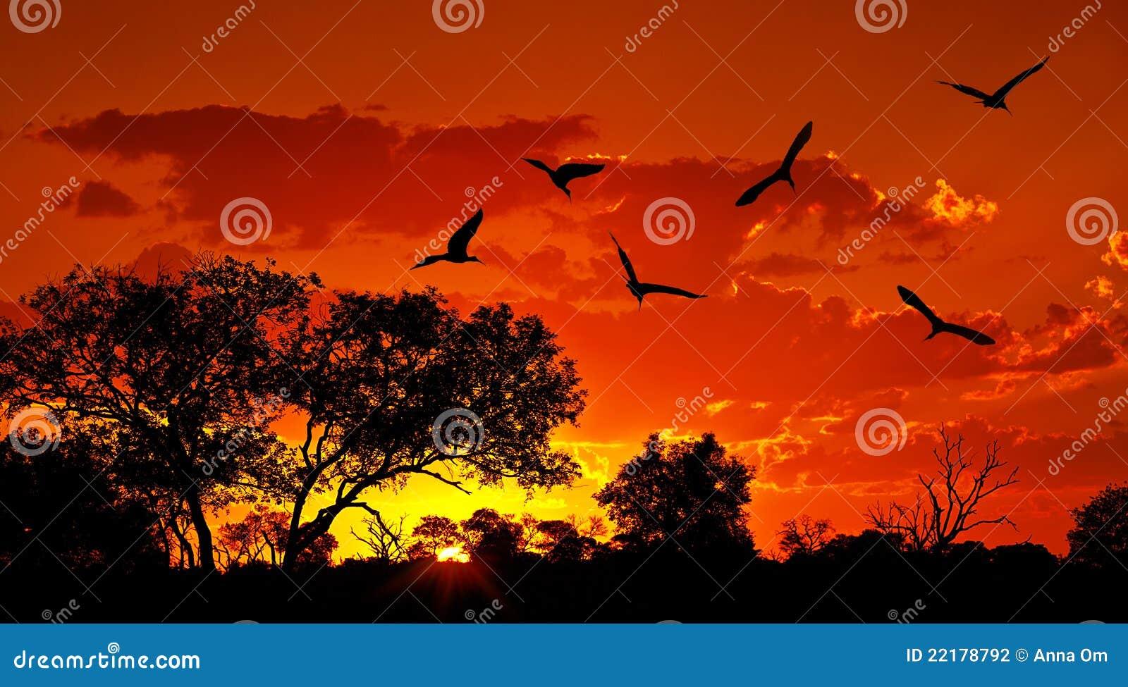 Paisaje de África con puesta del sol caliente