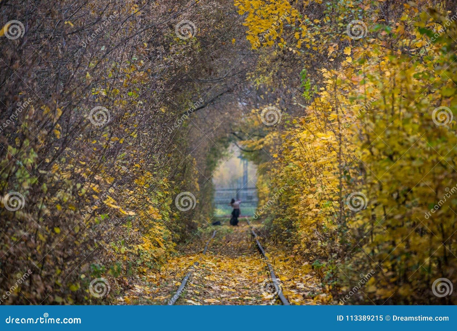 Paisaje De Autumn Fall Road Los árboles Reales Hacen Un Túnel Los