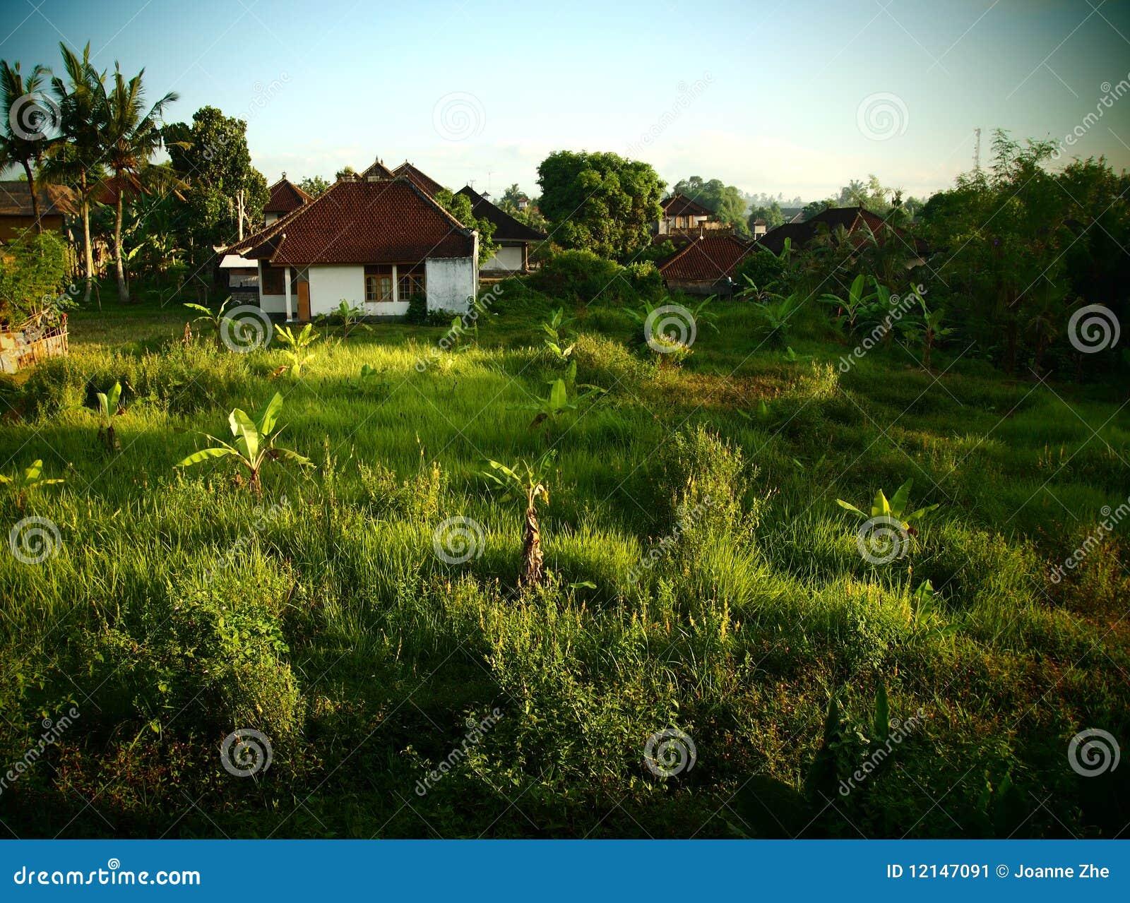 Paisaje de Bali con la plantación de plátano