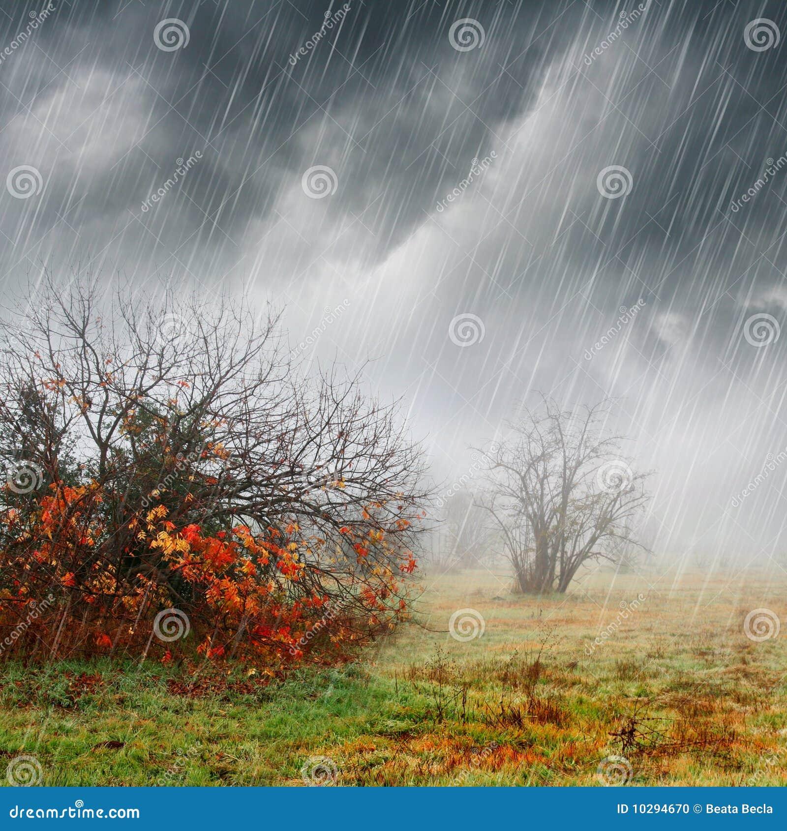 Paisaje de la caída en lluvia y niebla