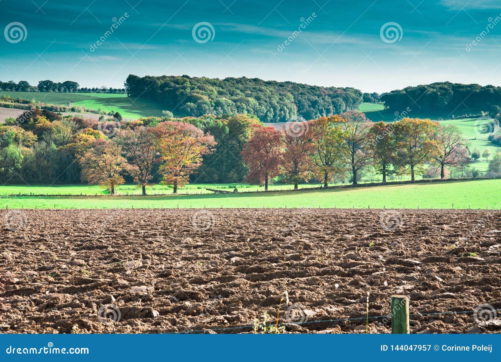 Paisaje de la colina en colores del oto?o Limburgo, los Pa?ses Bajos