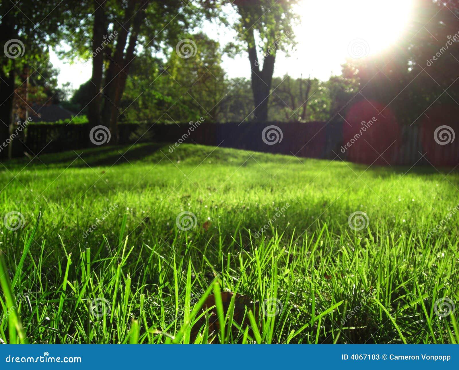 Paisaje de la hierba verde