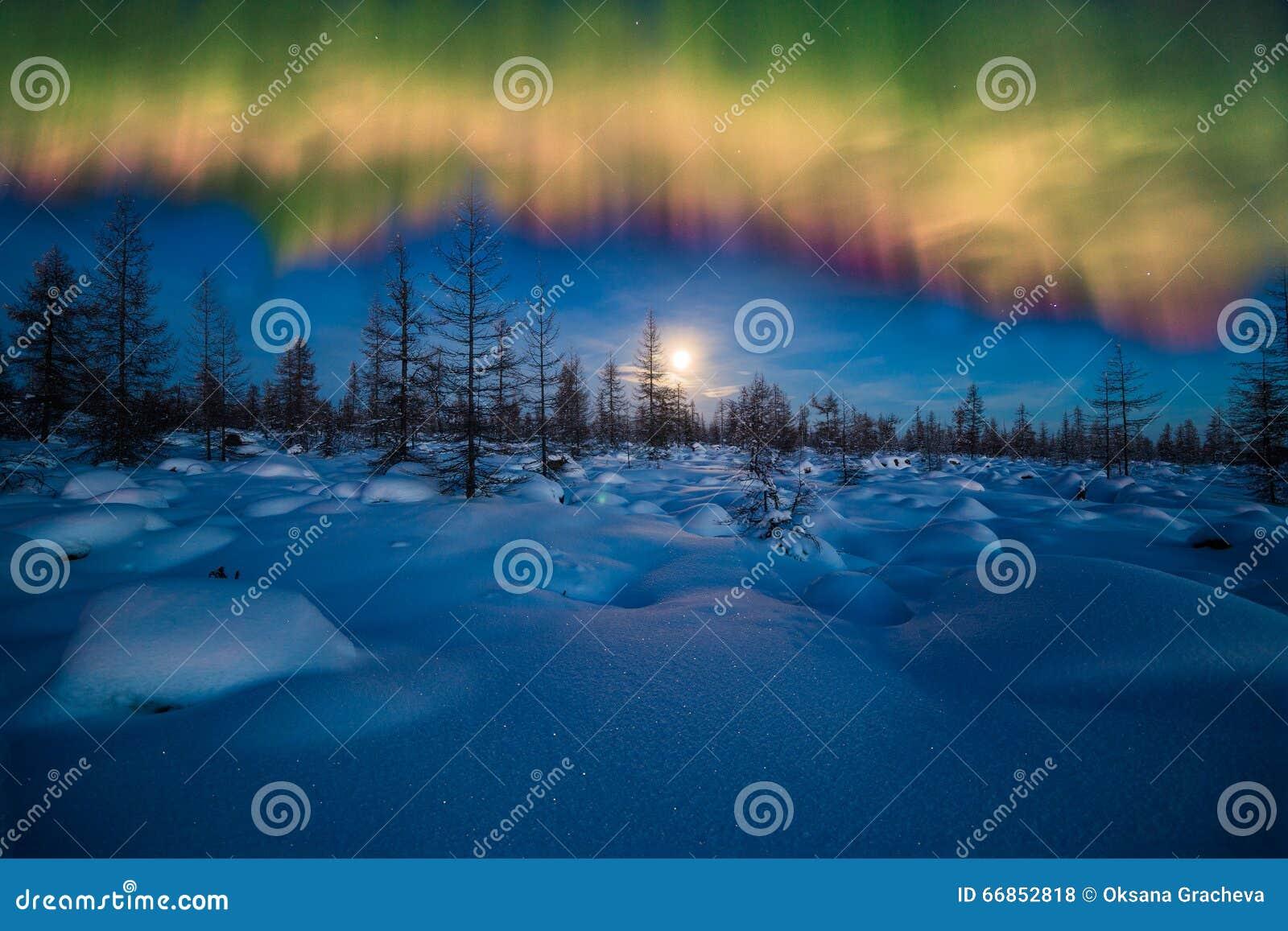 Paisaje de la noche del invierno con el bosque, la luna y la luz septentrional sobre el bosque