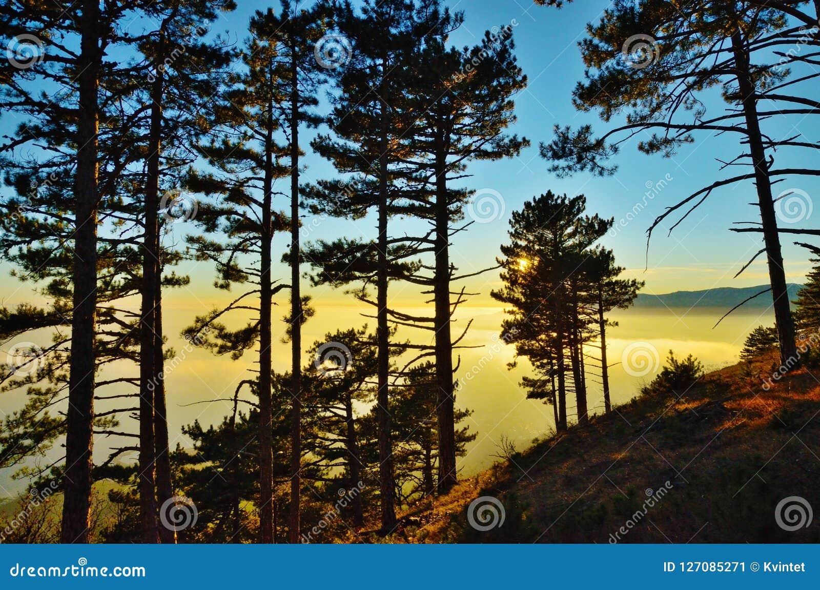 Paisaje de la puesta del sol en bosque en la cuesta de montaña