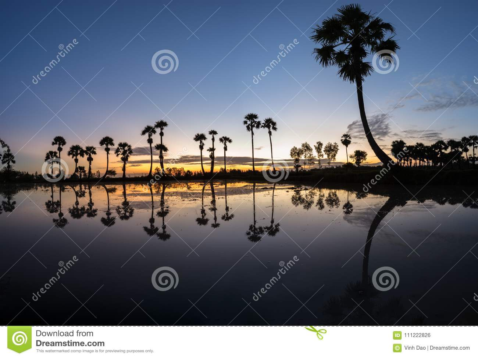 Paisaje de la salida del sol con las palmeras del azúcar en el campo de arroz por mañana Delta del Mekong, Chau doc., An Giang, V