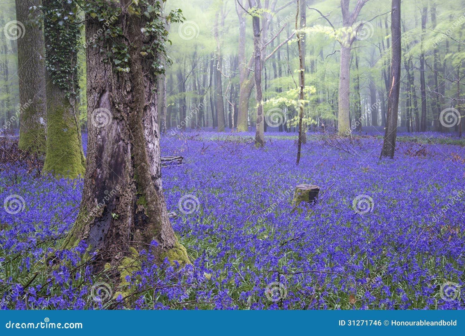 Paisaje de niebla de la campanilla de la alfombra del bosque vibrante de la primavera