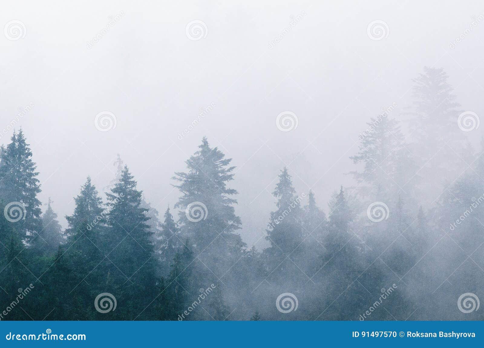 Paisaje de niebla de la mañana