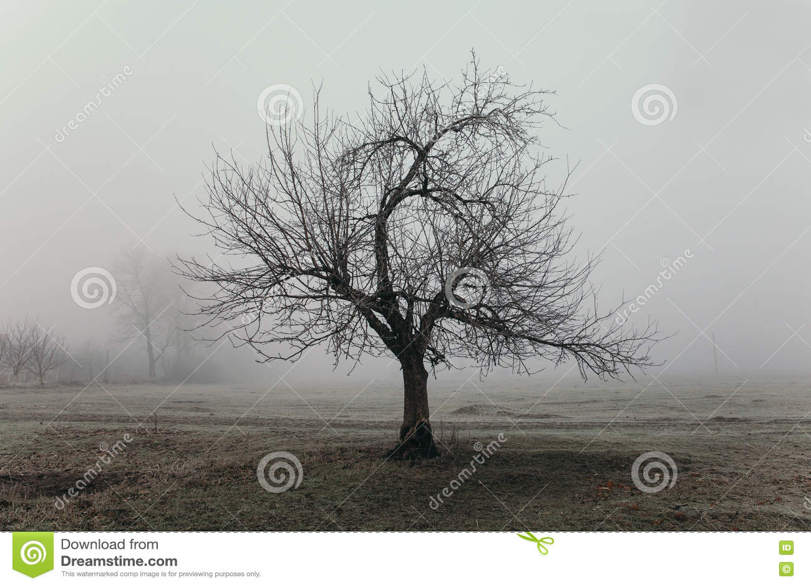 Paisaje de niebla del campo con el árbol extraño de la forma Concepto de la tristeza y de la soledad Mañana temprana del invierno