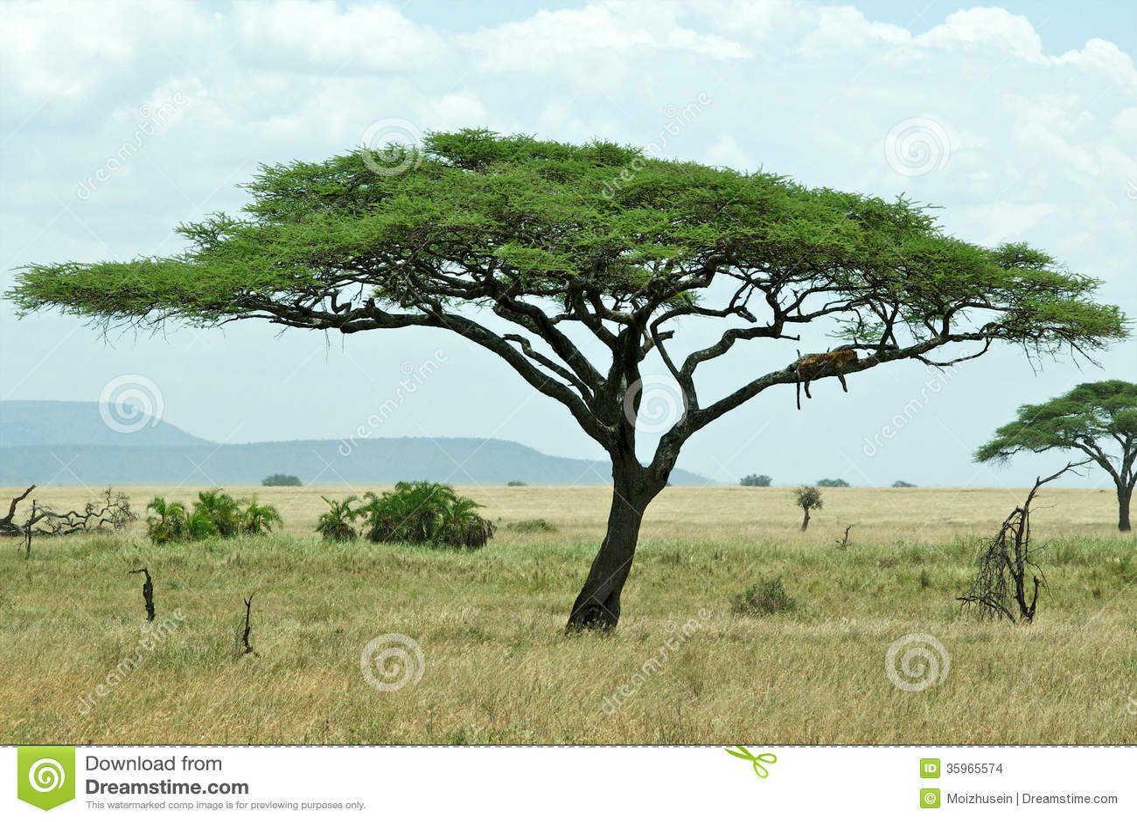 Paisaje de Tanzania