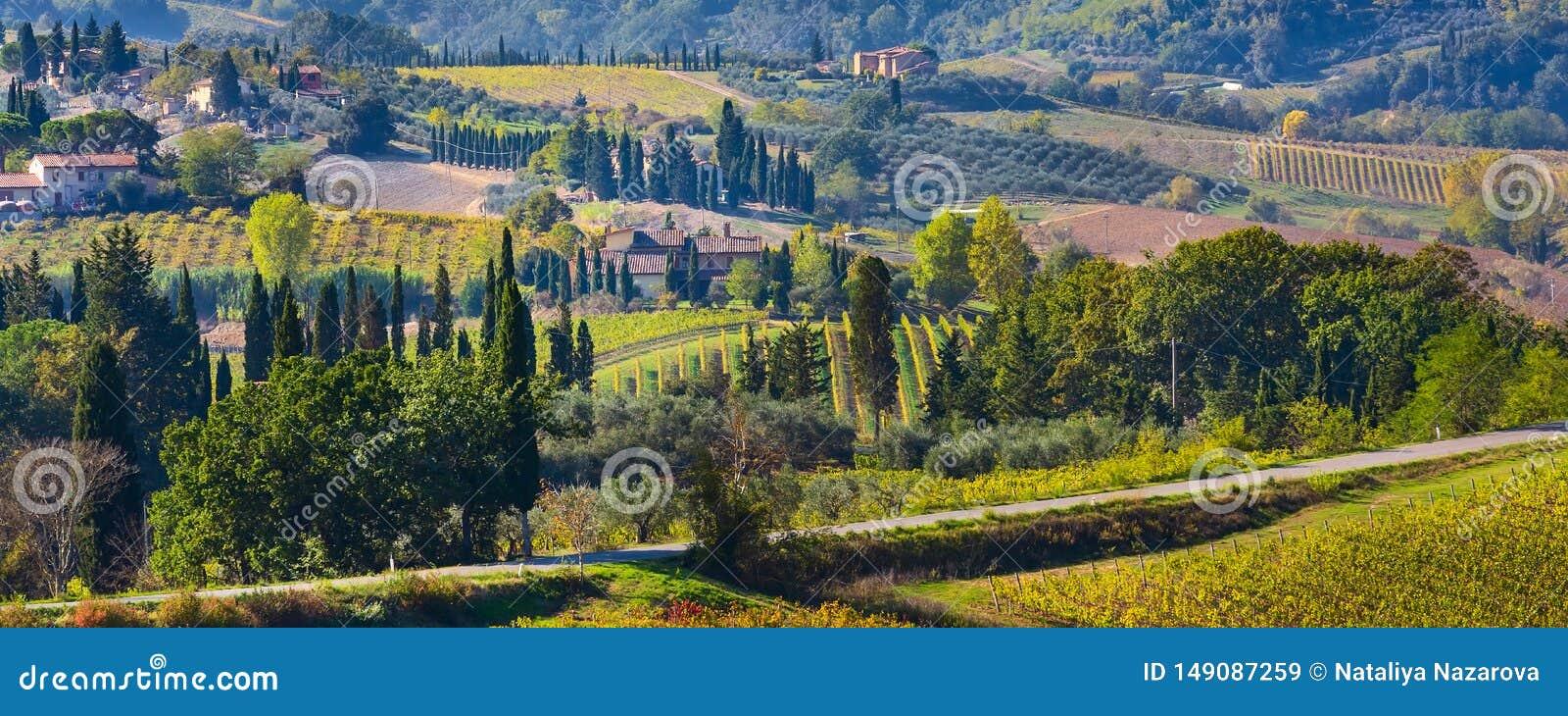 Paisaje de Toscana con los vi?edos, ?rboles de cipr?s