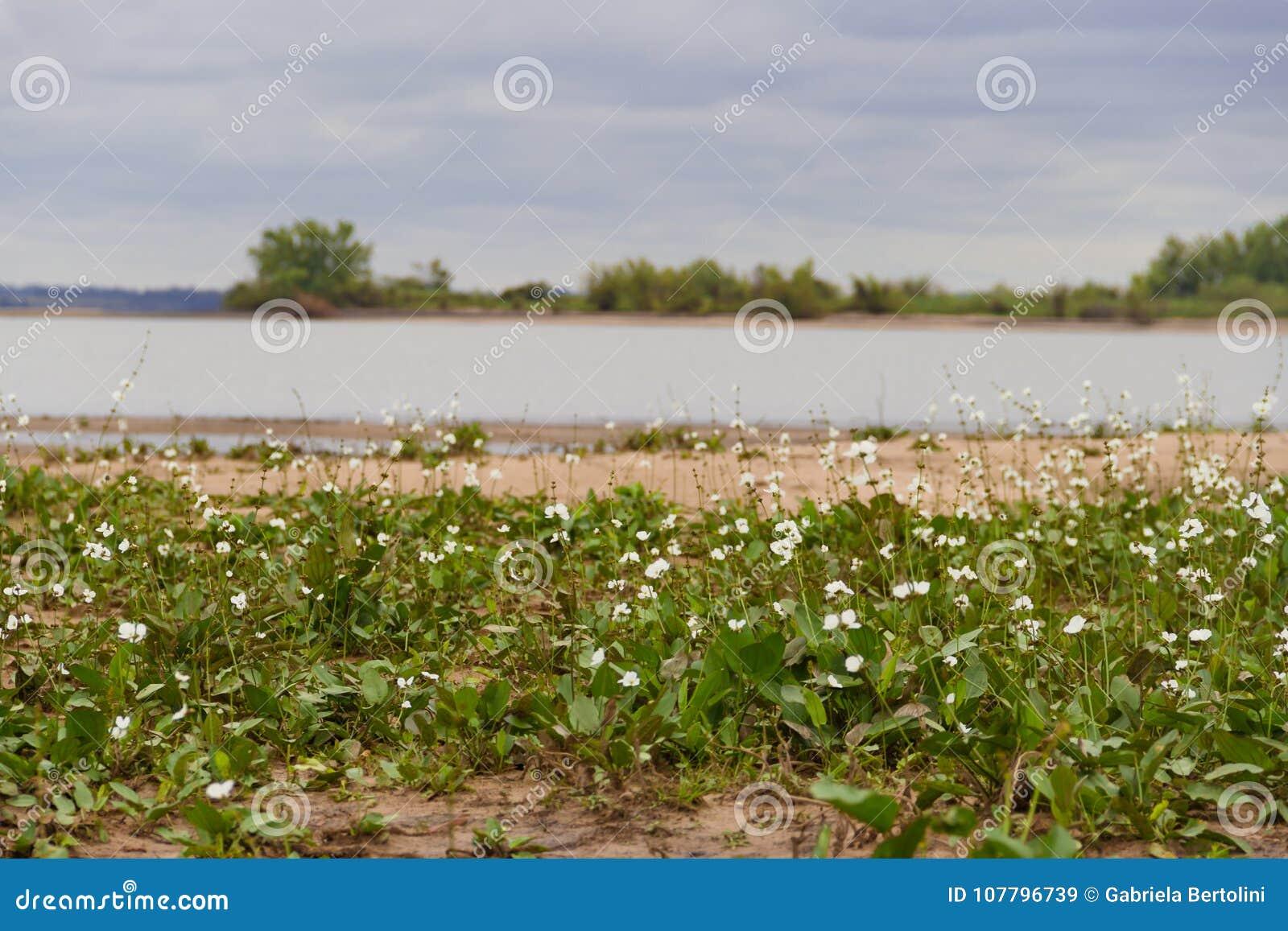 Paisaje de verano y tormenta en la playa y camalotes blancos ciudad de federación, provincia de Entre Ríos, Argen