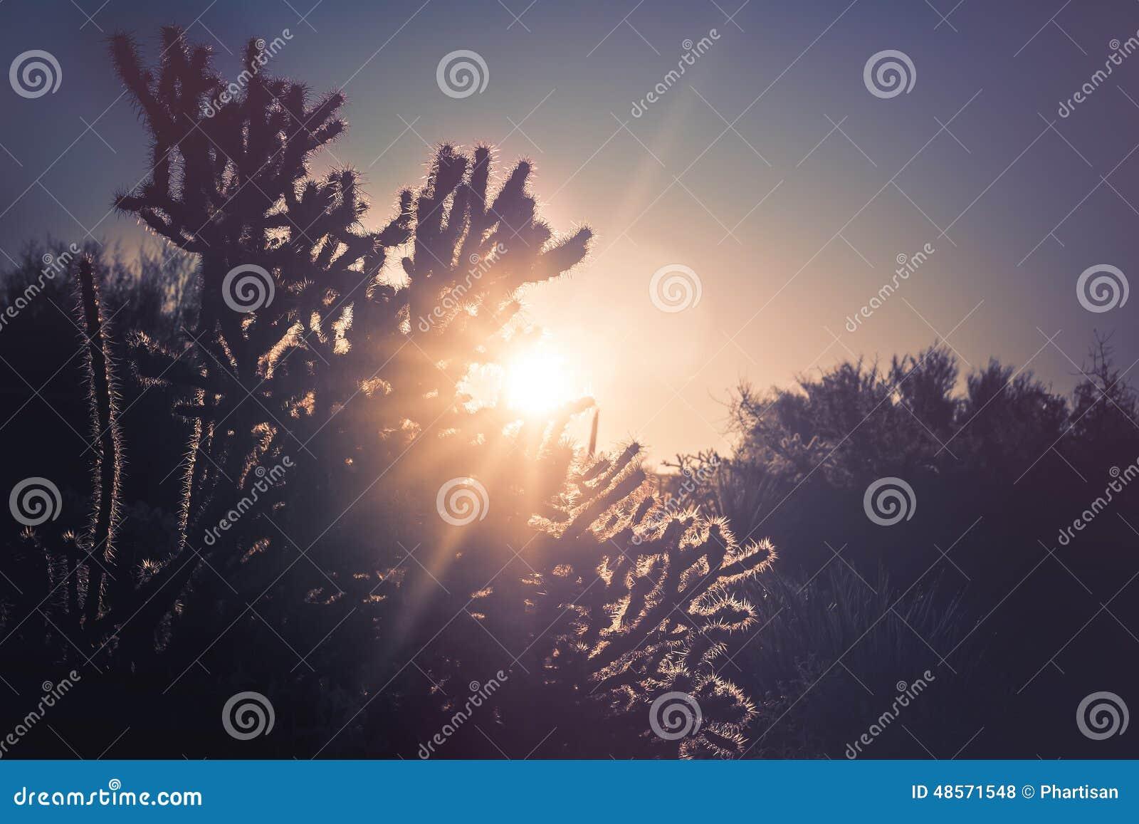 Paisaje del árbol del cactus del desierto de Arizona
