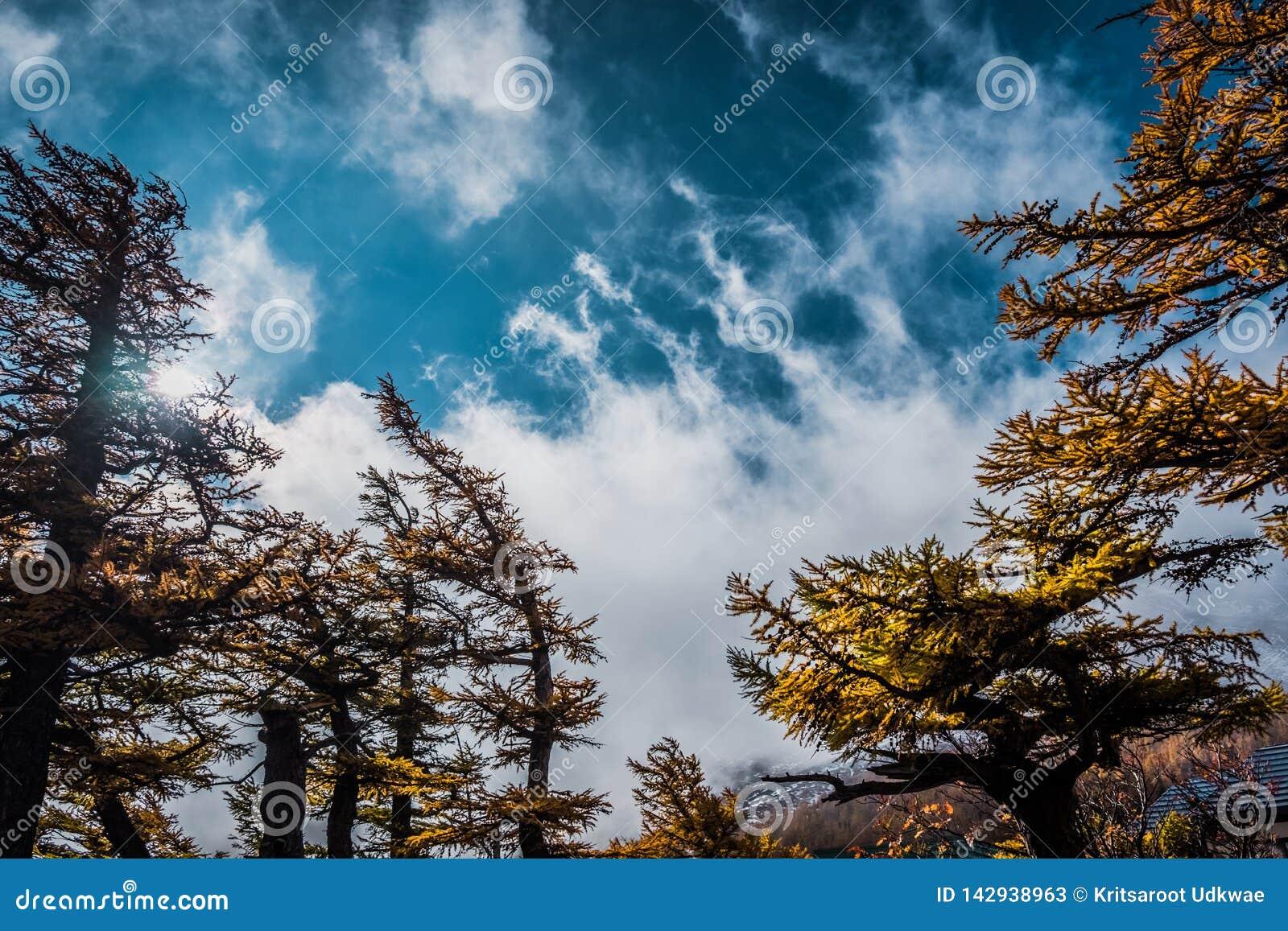 Paisaje del árbol y de la nube con el cielo azul, visión desde la línea 5ta estación de Fuji Subaru