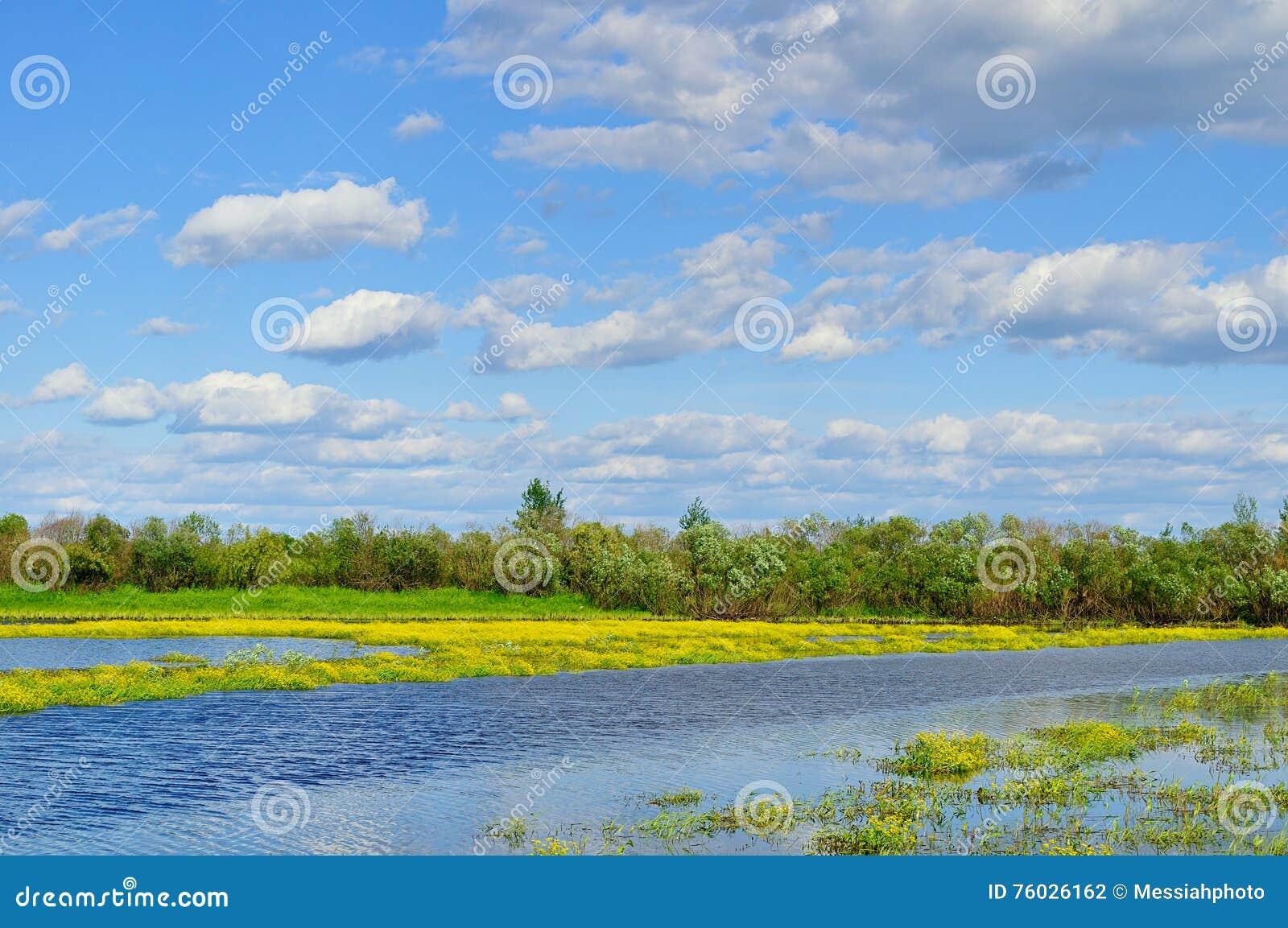 Paisaje del agua del verano - opinión rural del paisaje del pequeño río en día soleado del verano