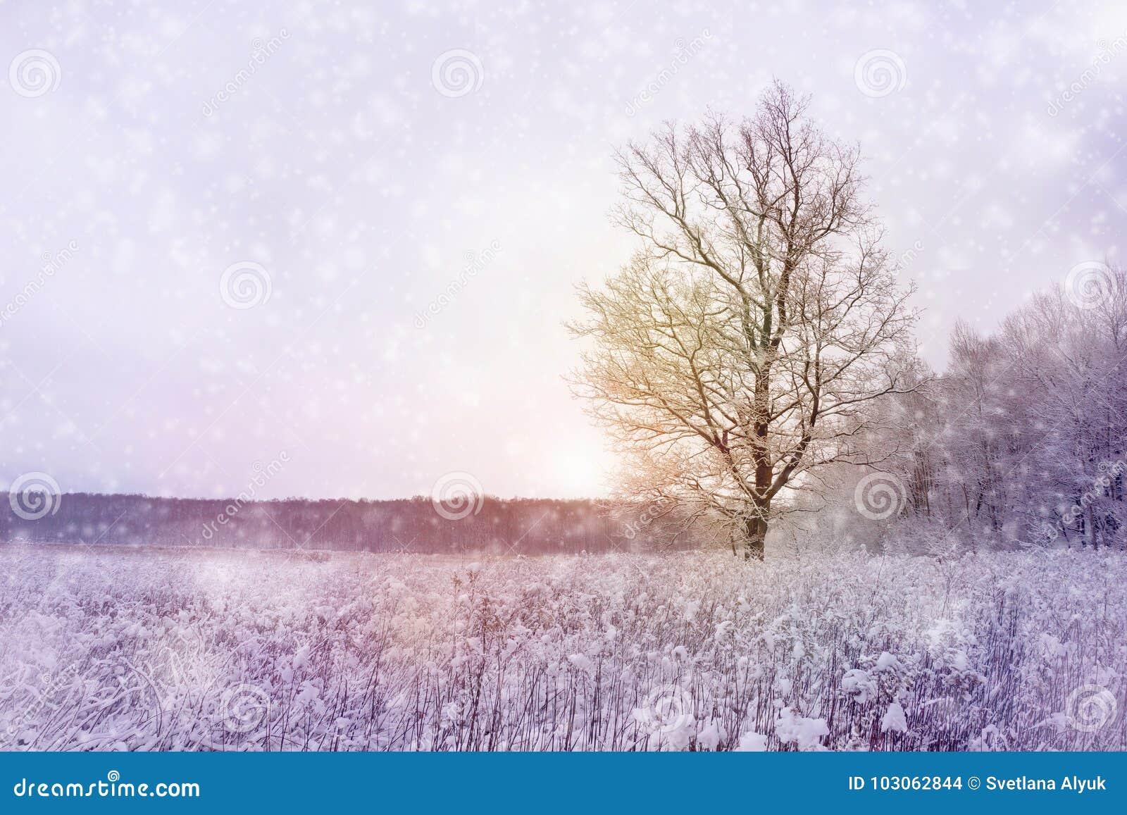 Paisaje del bosque de la estación del invierno