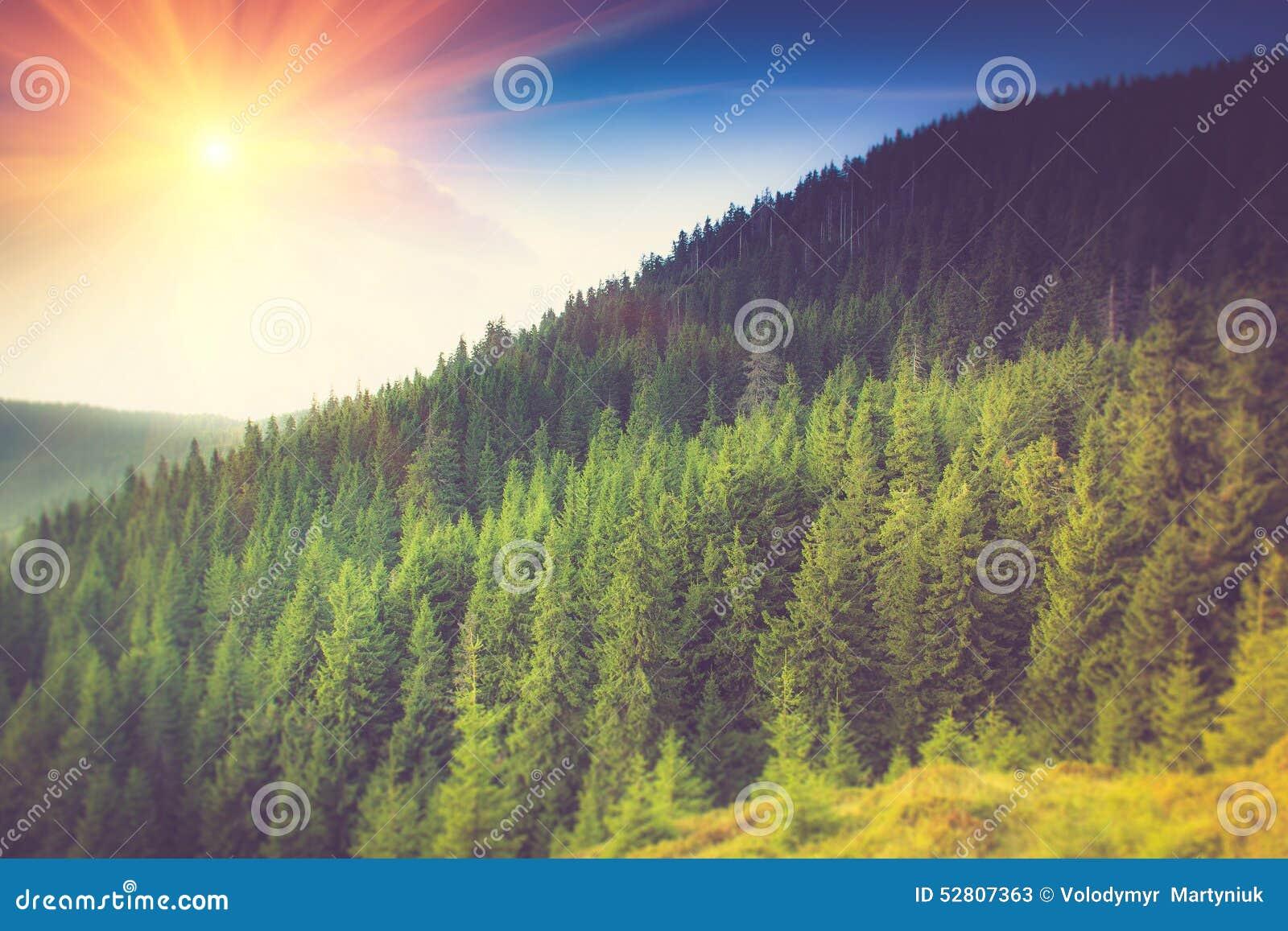 Paisaje del bosque de la montaña debajo del cielo de la tarde con las nubes