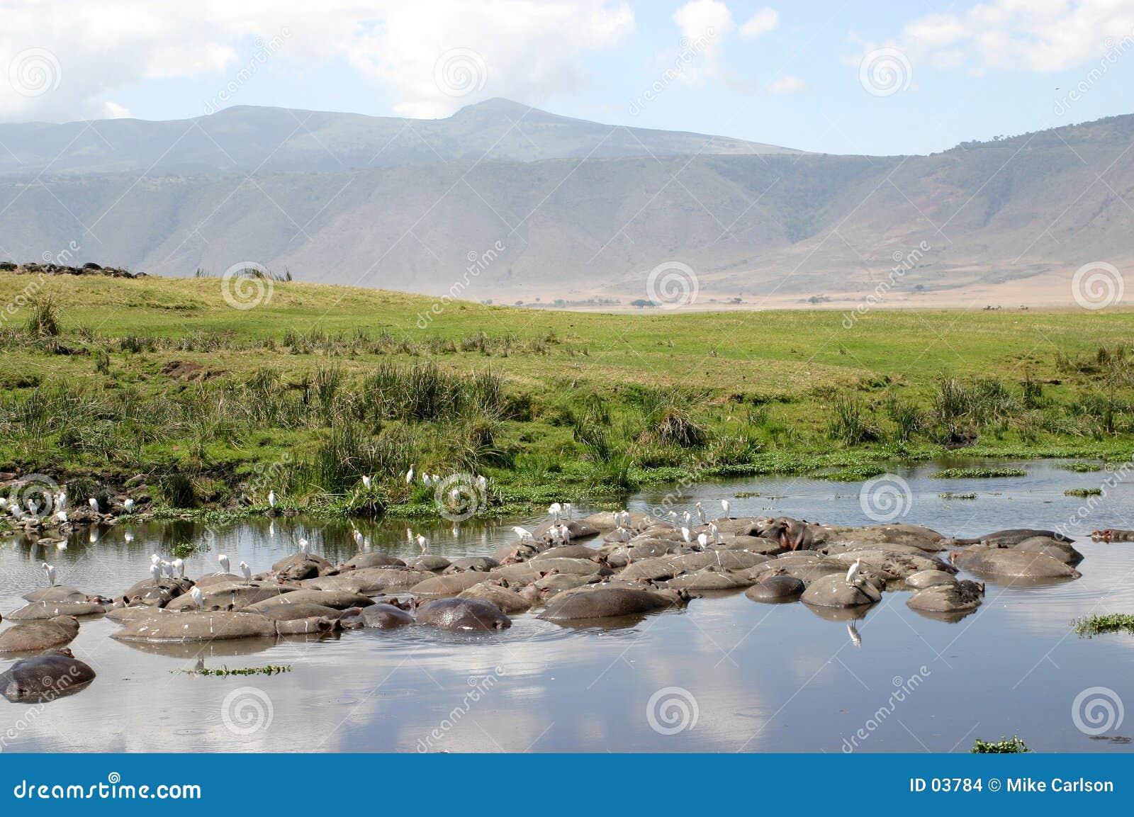 Paisaje del cráter con los hipopótamos