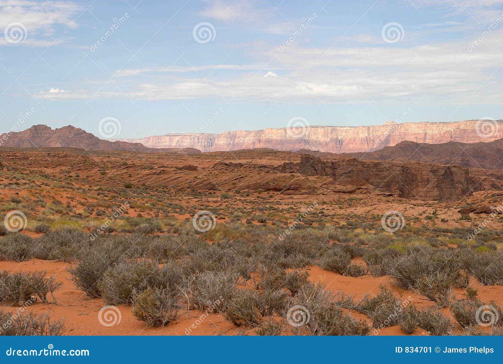 Paisaje del desierto de Arizona