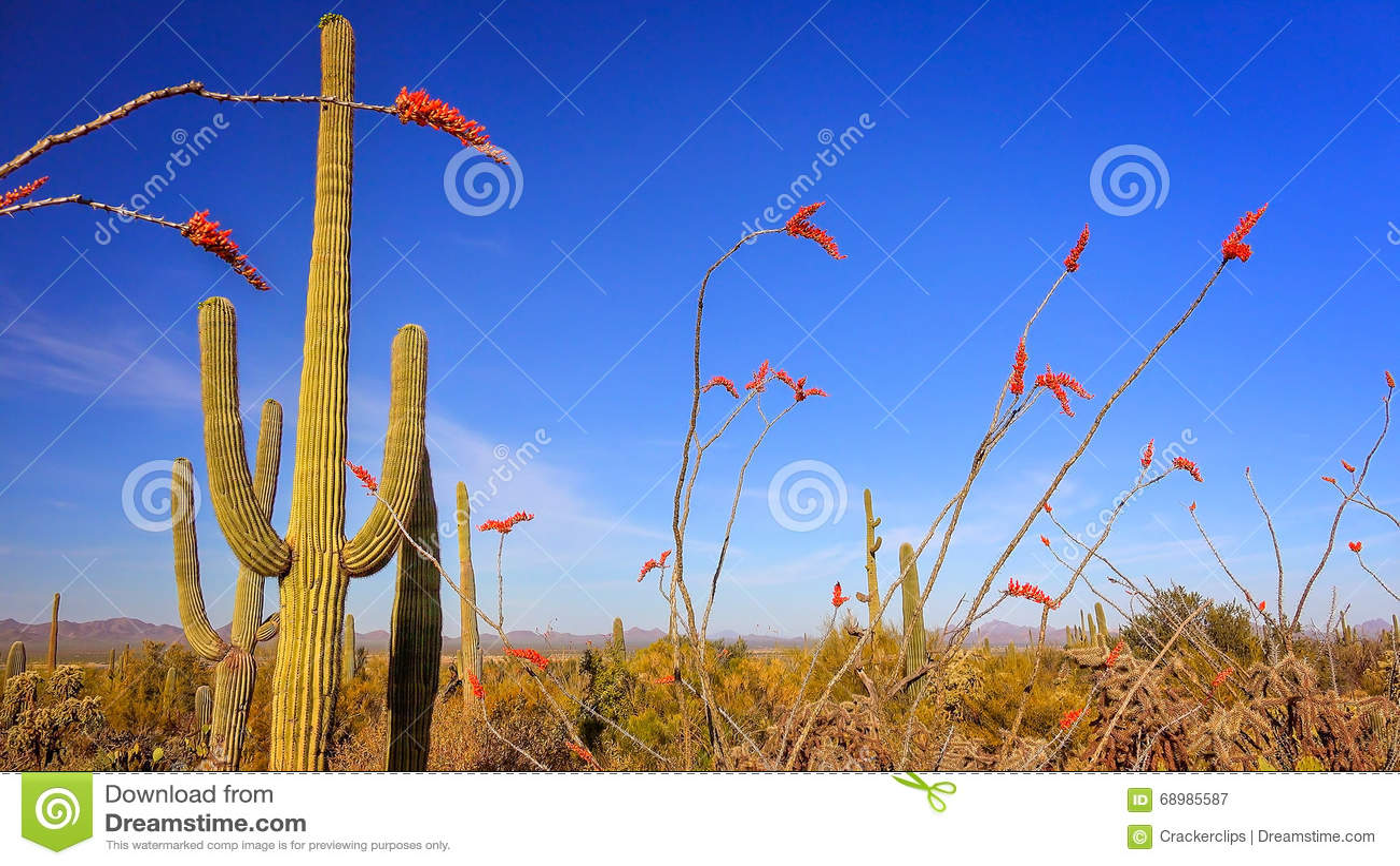 Paisaje del desierto de Sonoran en parque nacional de Saguaro