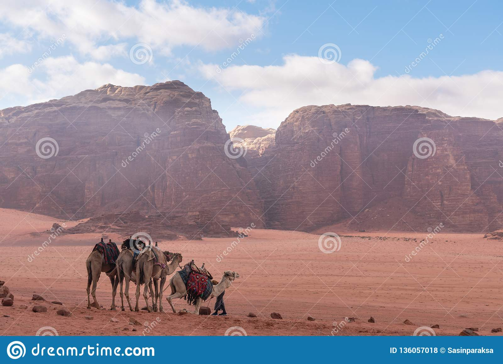 Paisaje del desierto de Wadi Rum en Jordania con los camellos que se enfrían por la mañana