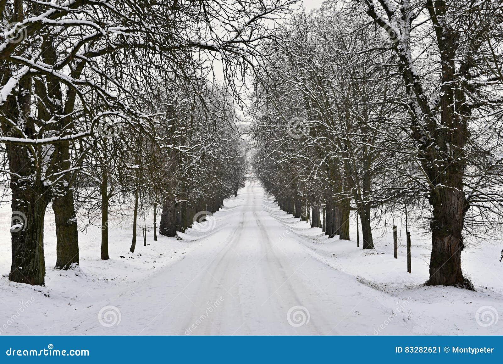 Paisaje del invierno rboles escarchados en la for Arboles en invierno