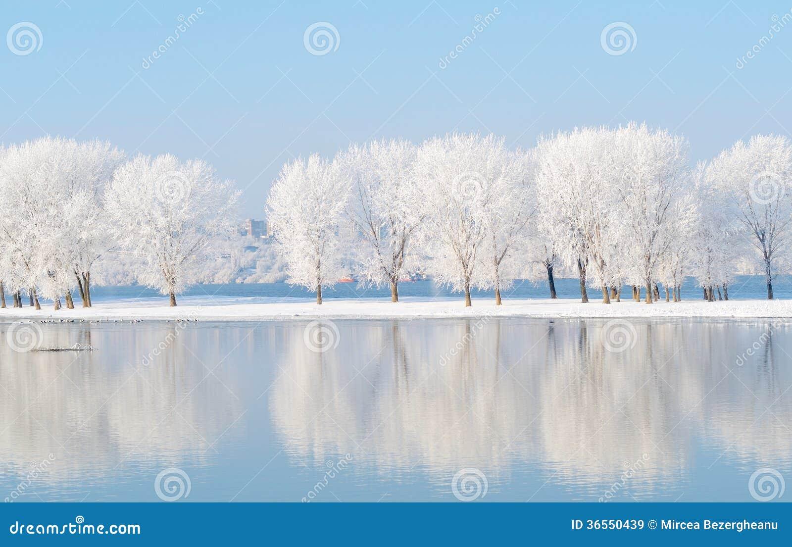 Paisaje del invierno con la reflexión en el agua