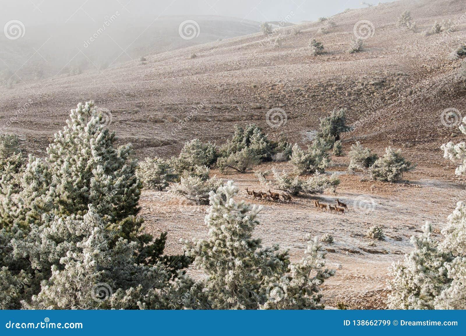 Paisaje del invierno de la montaña El sol es brillante Valle nevado Paisaje a través de los árboles