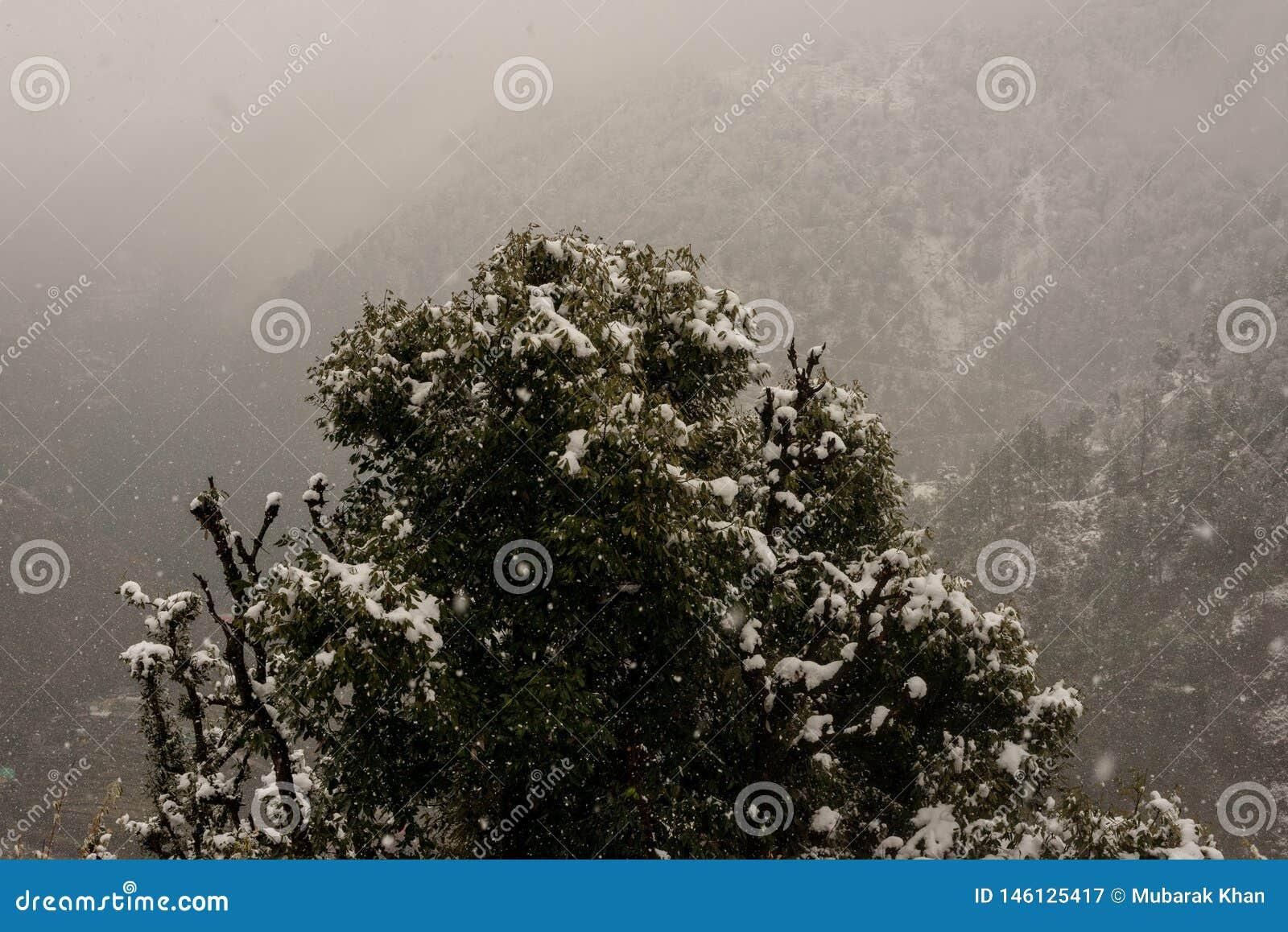 Paisaje del invierno Plantas del ?rbol y de la hierba seca en la nieve La nieve caped la cordillera en fondo borroso