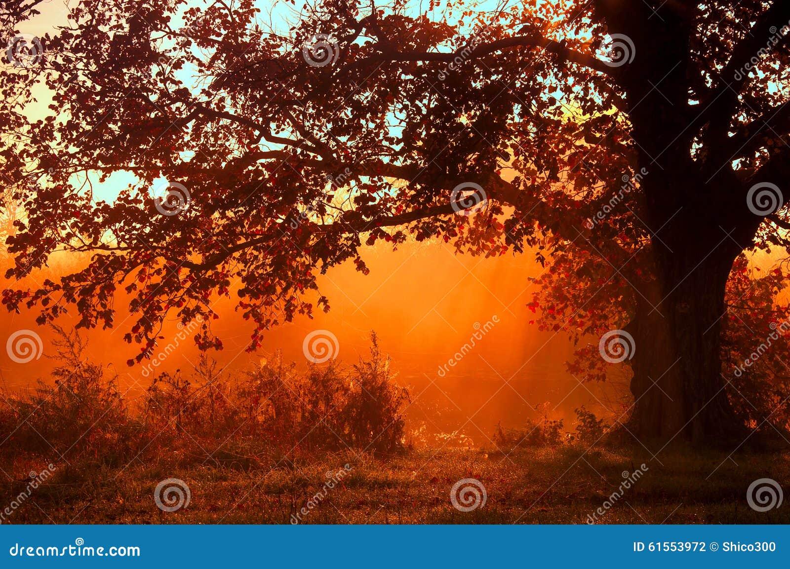 Paisaje del otoño, árboles en la niebla en el amanecer