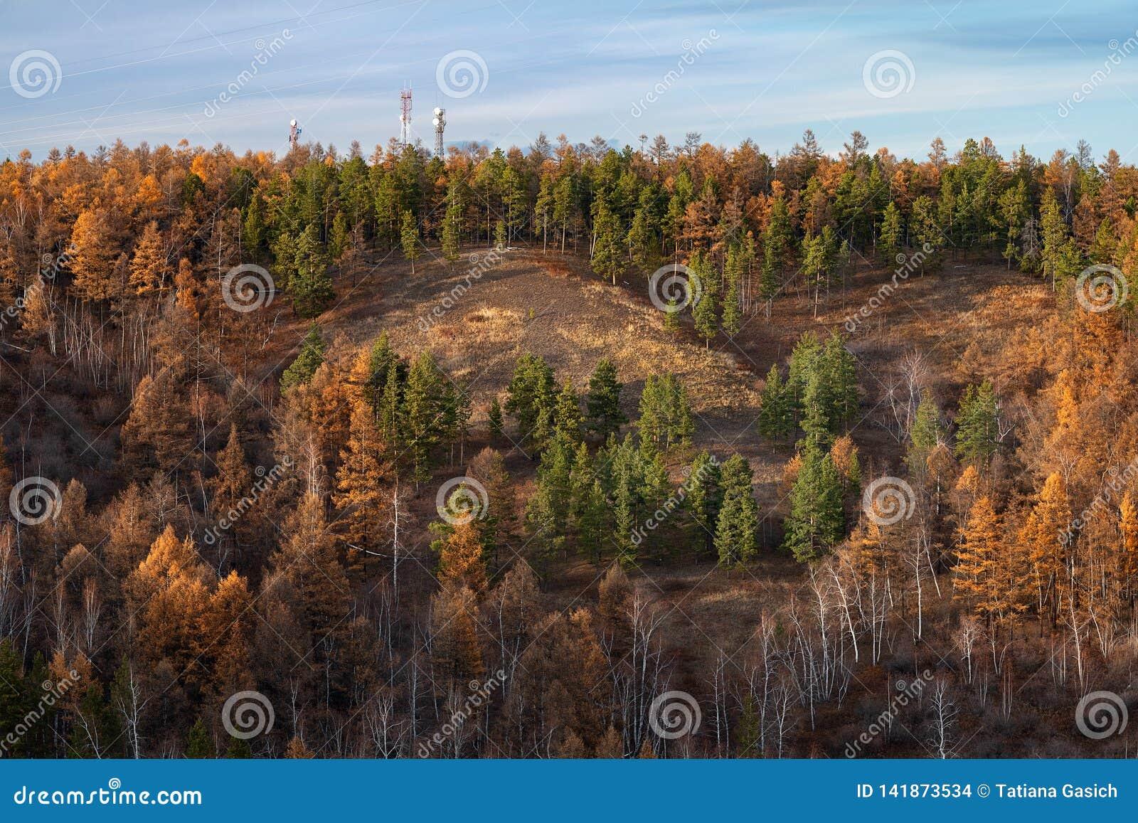Paisaje del otoño con los árboles