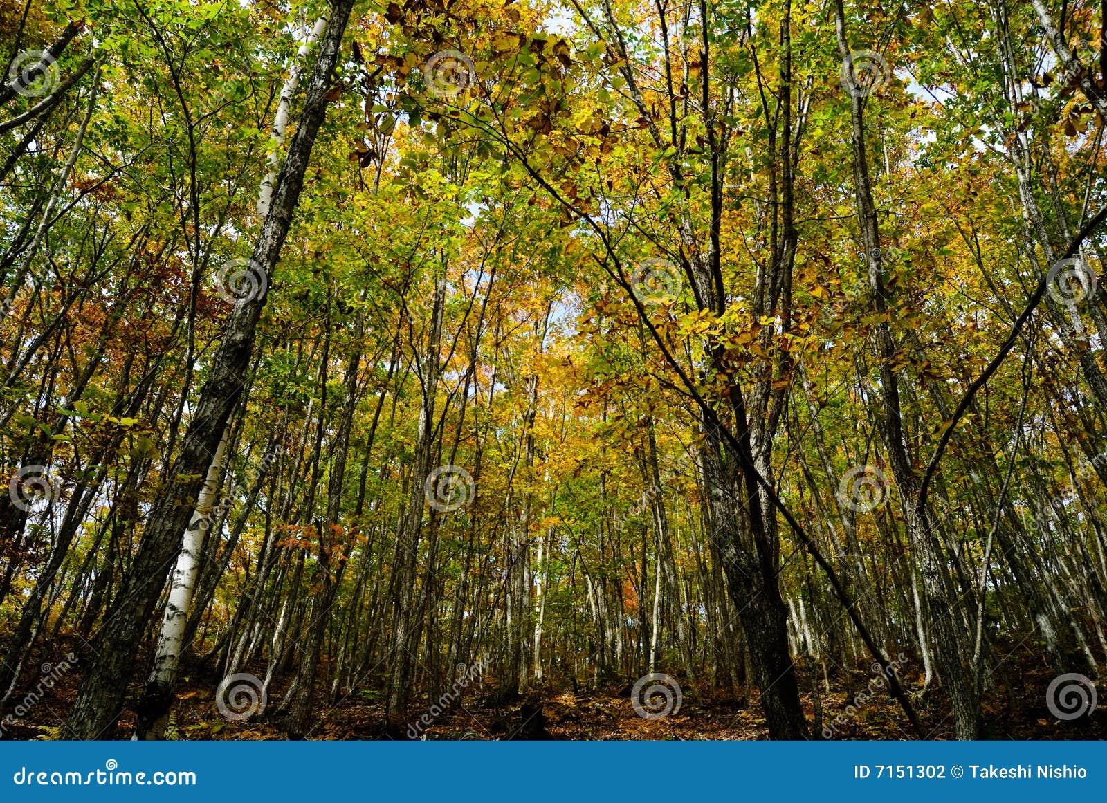 Paisaje del otoño del bosque profundo