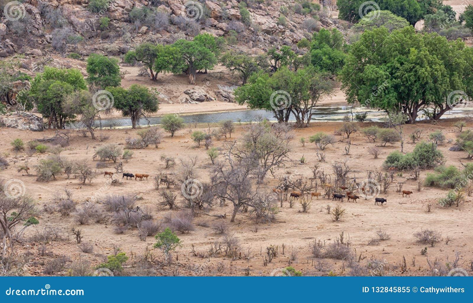 Paisaje del río del Limpopo
