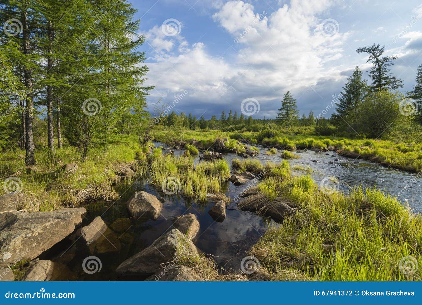 Paisaje del verano con el río, cielo nublado, bosque e hierba y flores