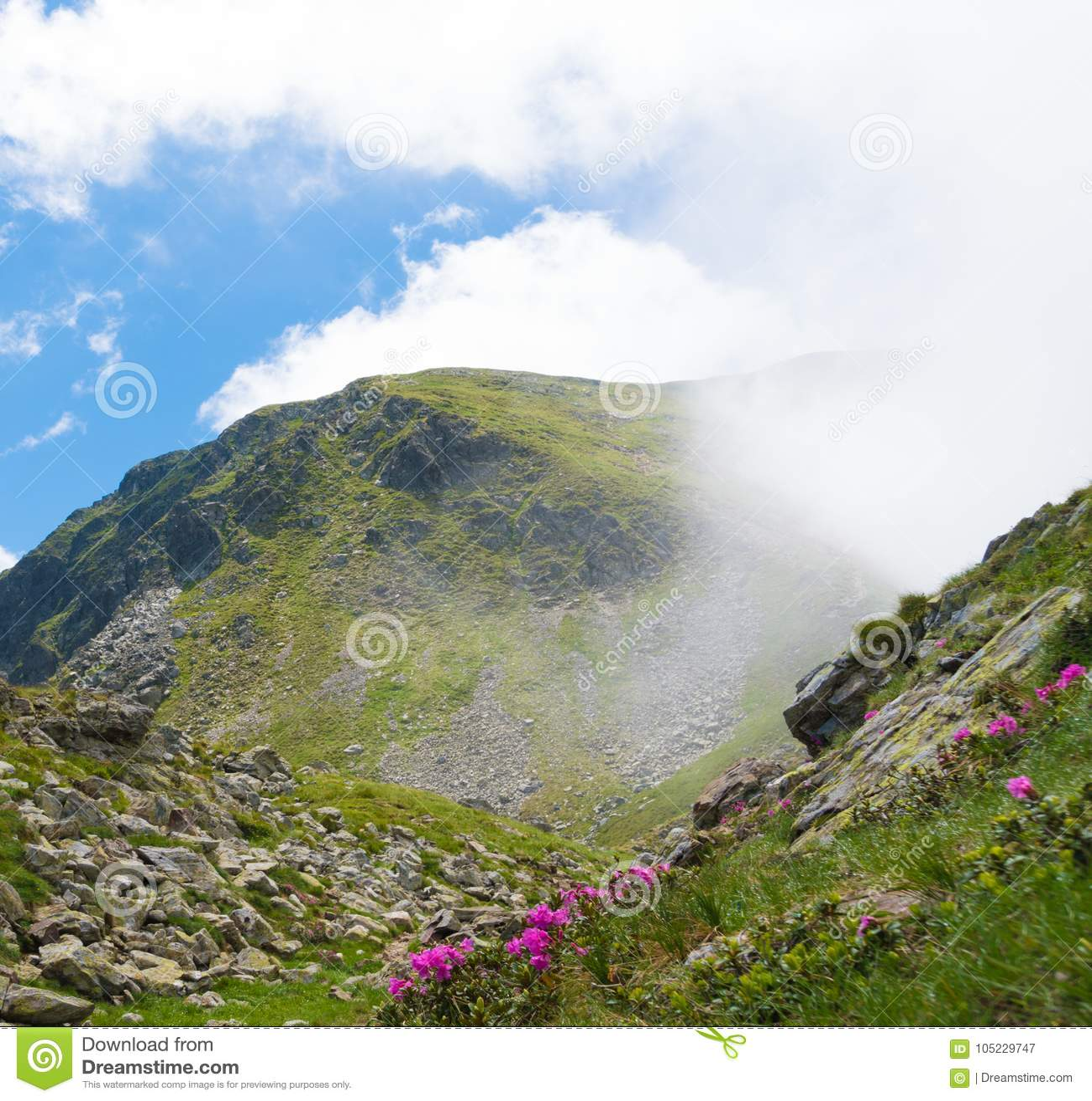 Paisaje del verano con las montañas rocosas y las flores salvajes hermosas en la niebla de la mañana