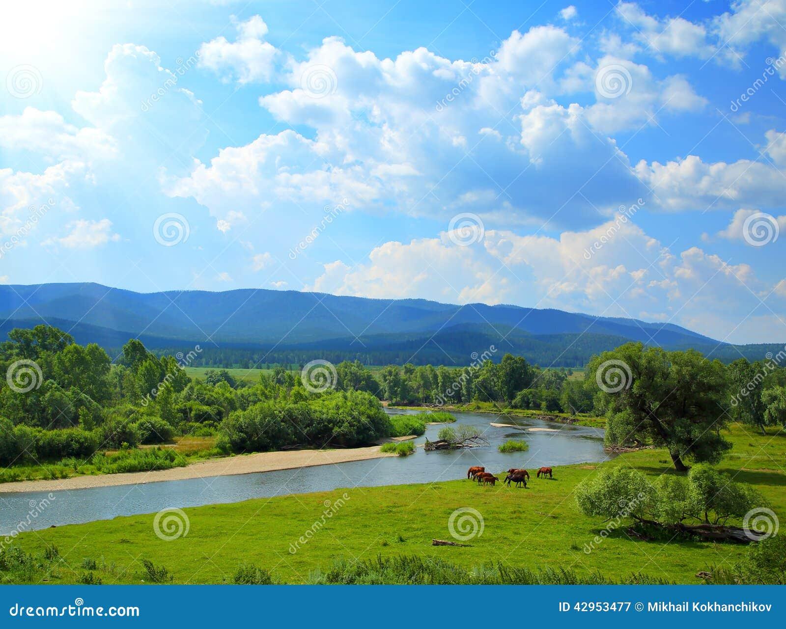 Paisaje del verano con las montañas y los caballos del río
