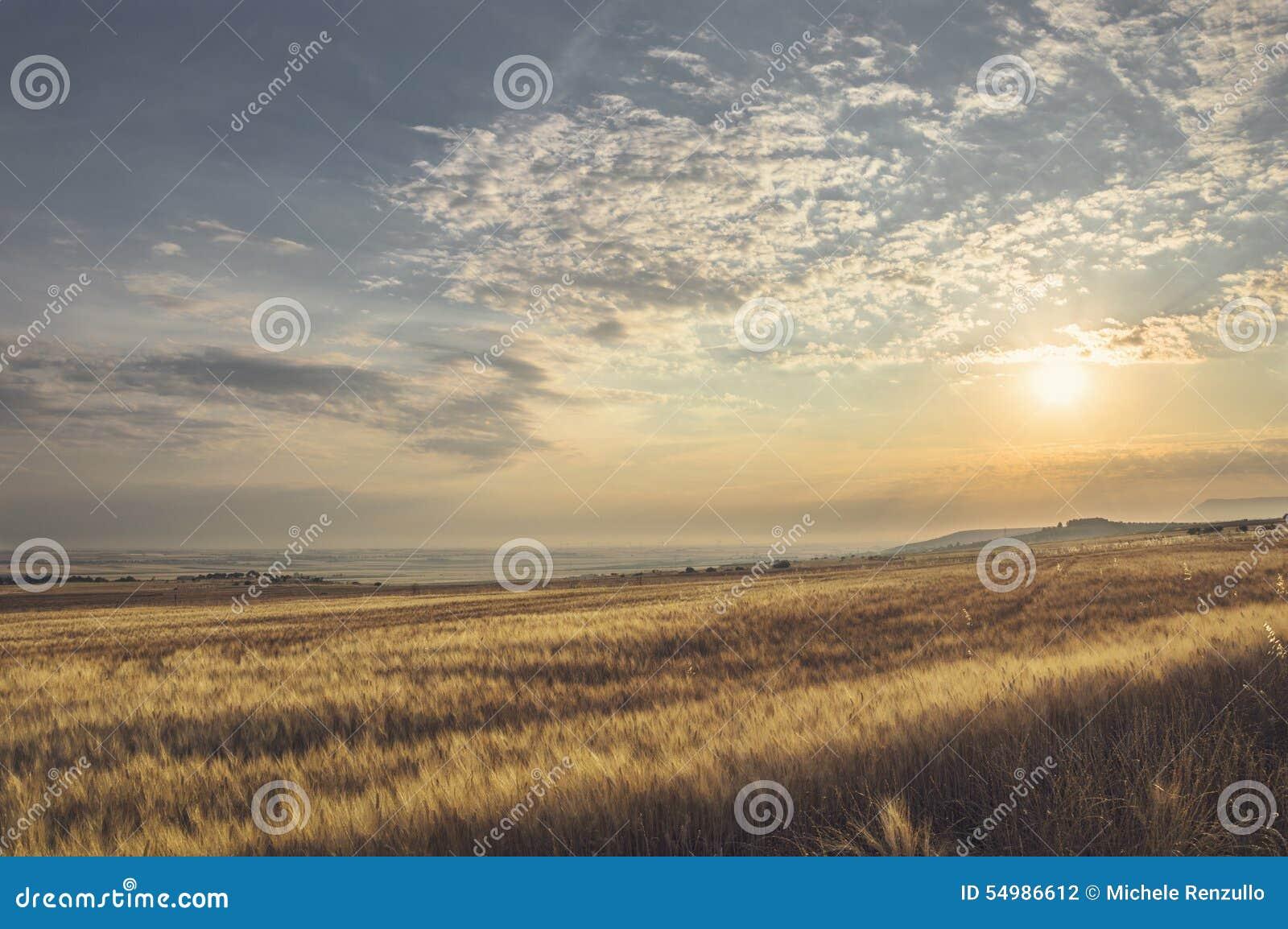 Paisaje del verano de un campo de trigo