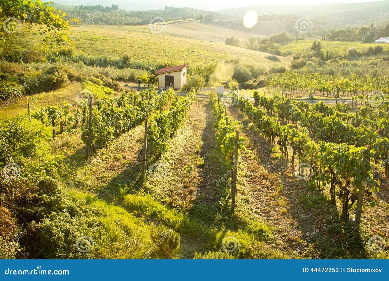 Paisaje del viñedo de Chianti en Toscana, Italia