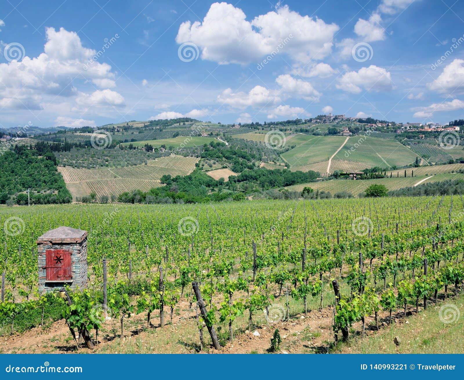 Paisaje del viñedo, región de Chianti, Toscana, Italia