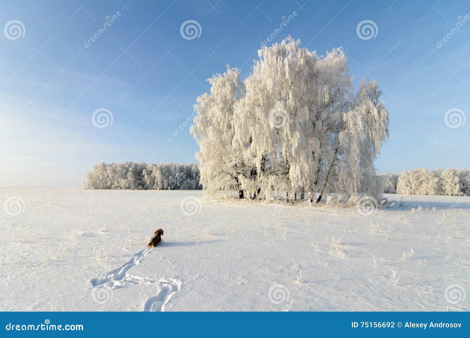 Paisaje e inglés cocker spaniel del invierno