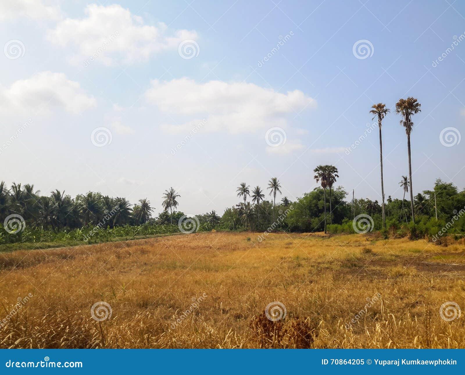 Paisaje en el nonthaburi de Tailandia