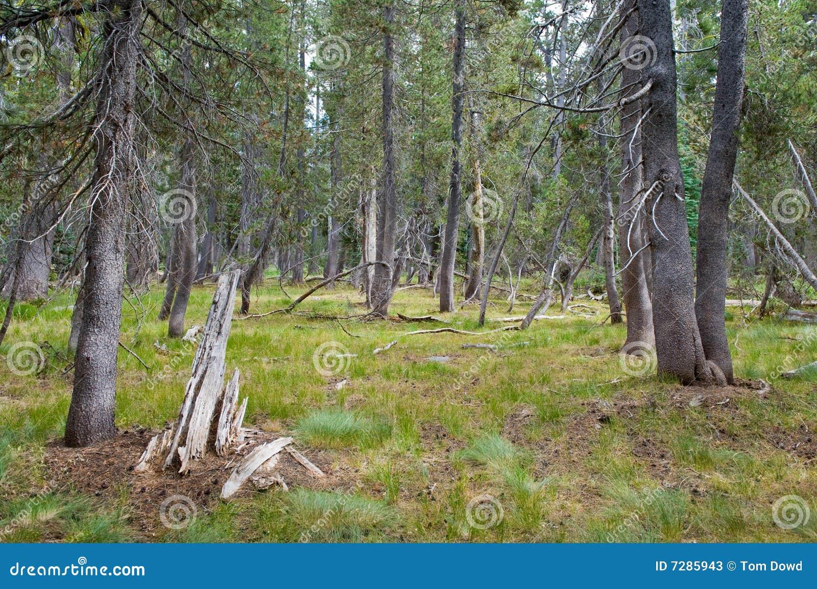 Paisaje escénico del bosque
