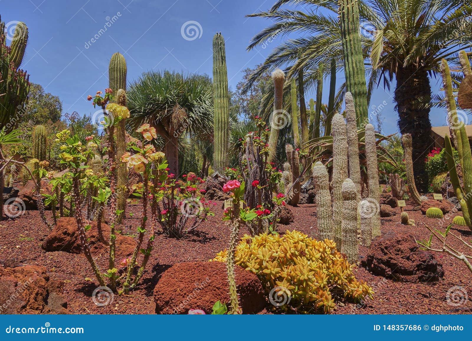Paisaje esc?nico con las plantas del cactus en la isla de Fuerteventura en el Oc?ano Atl?ntico