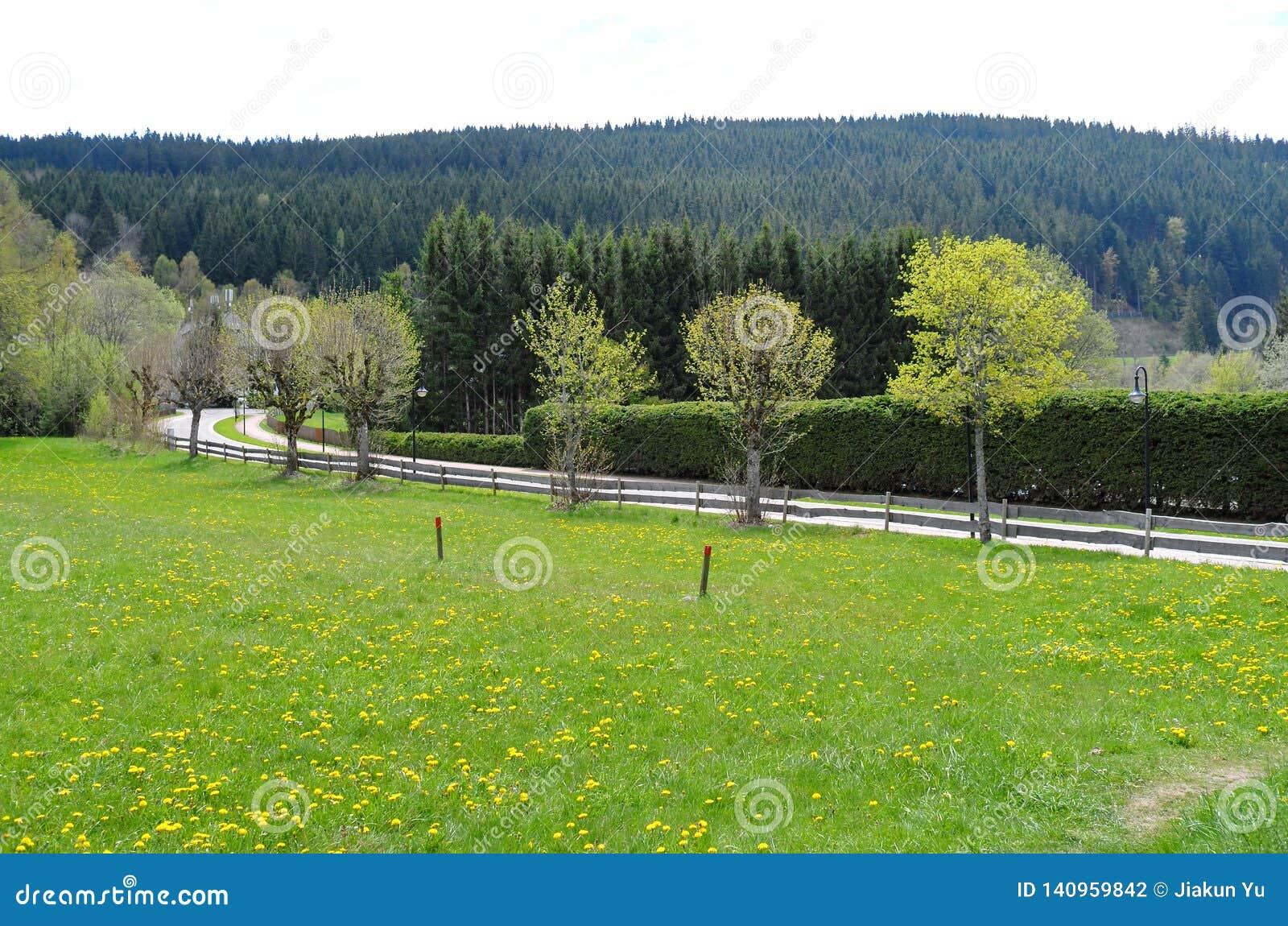 Paisaje hermoso del prado en Alemania