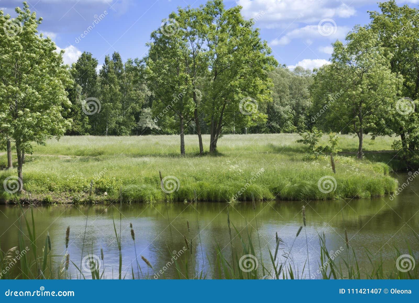Paisaje hermoso del verano con los árboles en la orilla del río, un prado y la madera en el horizonte