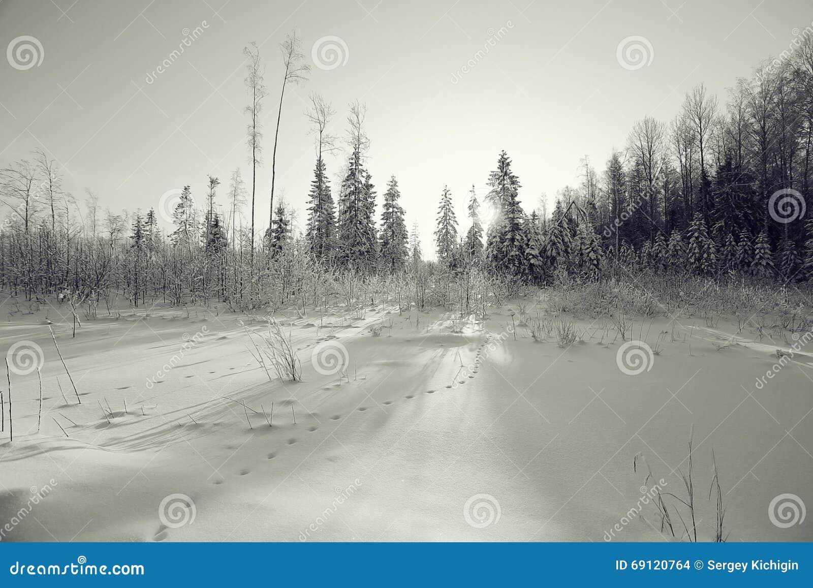 Paisaje monocromático del invierno