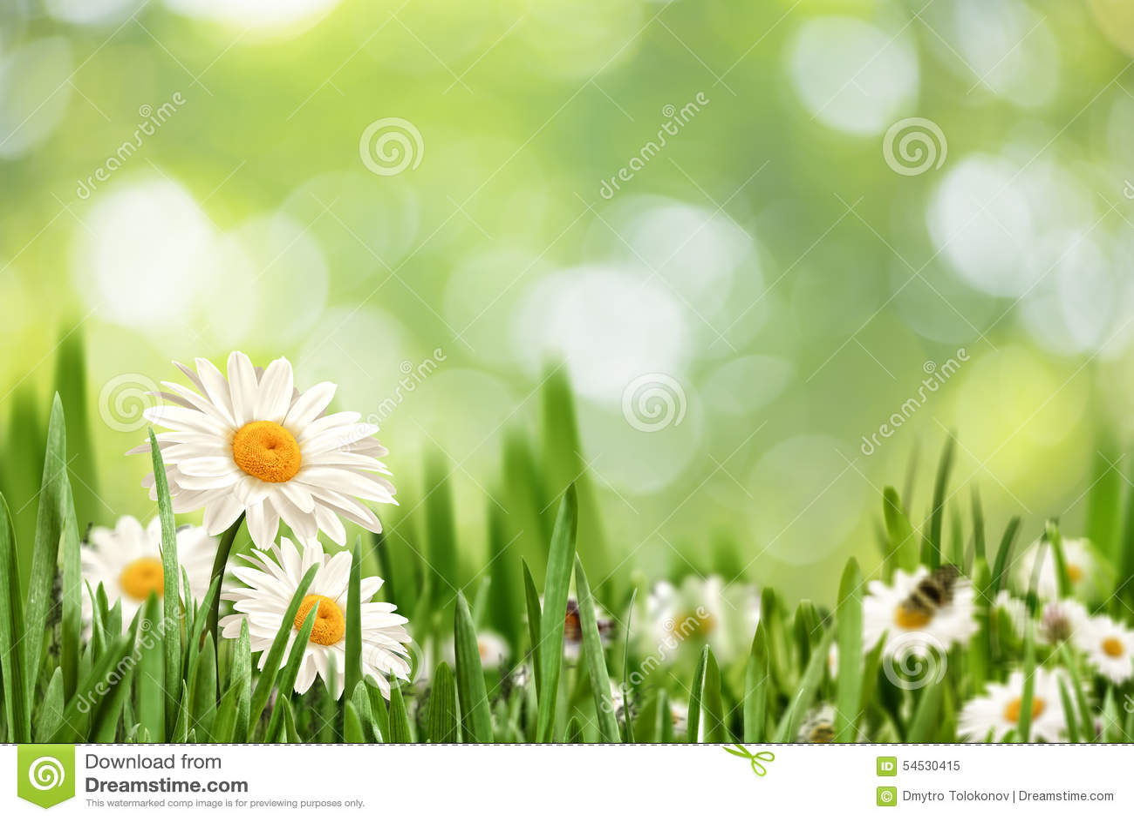 Paisaje natural abstracto con las flores de la margarita de la belleza