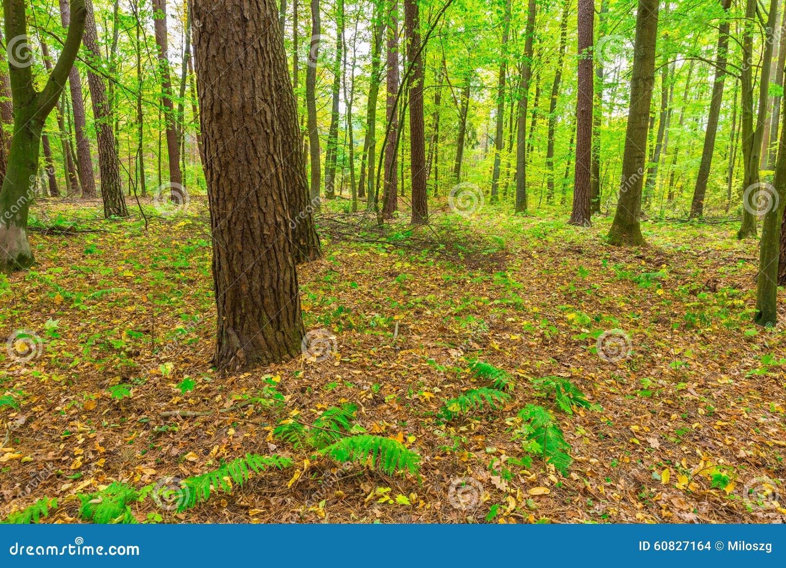 Paisaje otoñal del bosque